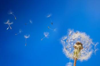 Fed: Parole al vento